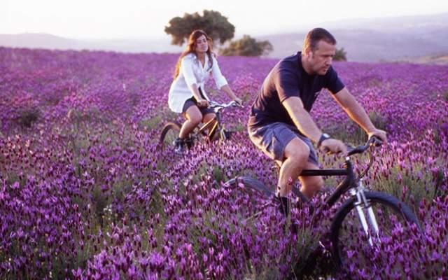 Centro Lavender Fireld